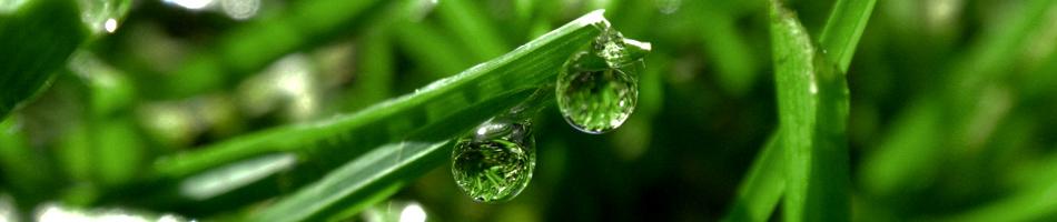 Medicinal Plants Information