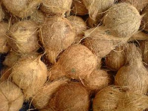 virgin coconut oil in coconut husks